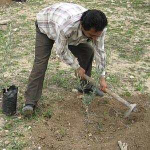 Zatoun Trees for Life planting